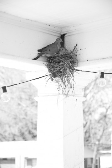 I came home to Eli and morning doves nesting on our deck. Both of these things made me incredibly happy.