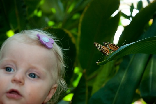 Annabel and some mating butterflies. (Rusty, this one is for you.)